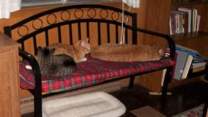 Charlie, Minnie and Jezebel